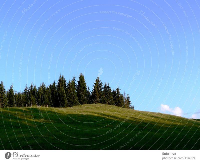 Schatten des Hügels Wolken Baum Wald Tanne Wiese grün saftig Farbe Verkehr Himmel Schönes Wetter strahlend blau Berge u. Gebirge Weide saftiges grün