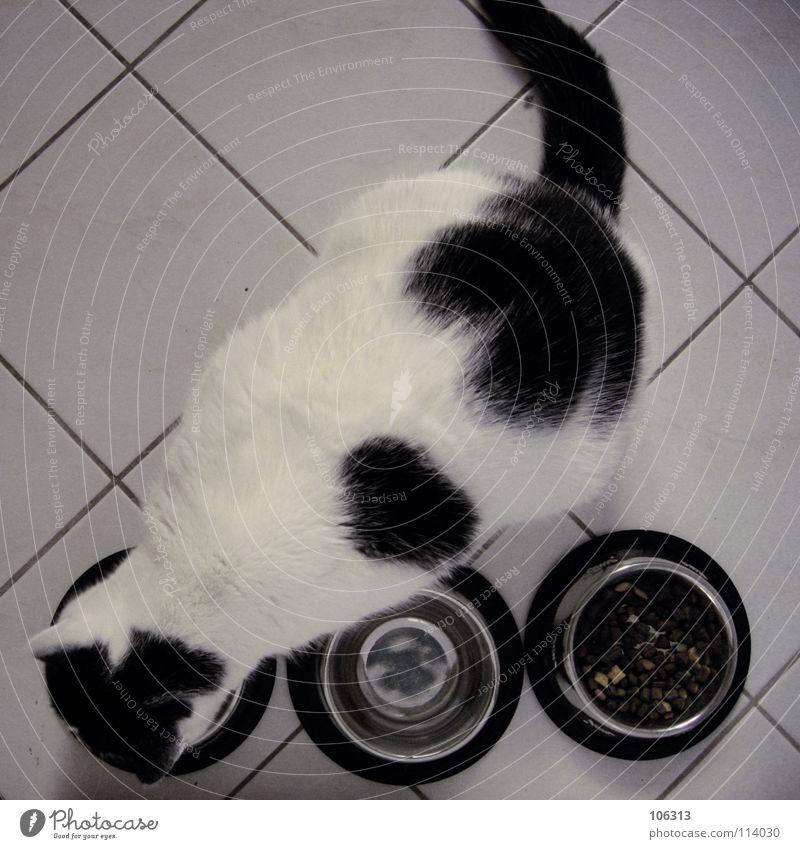 SCHWEINEHUND Katze Hauskatze Tier weiß scheckig Blick gefangen Fressen Ernährung Festessen Küche Schalen & Schüsseln Metall 3 Fleck verloren vergangen