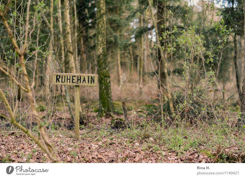 RuheHain Natur Pflanze Baum Landschaft ruhig Wald Umwelt Frühling natürlich authentisch Schönes Wetter Frieden Friedhof