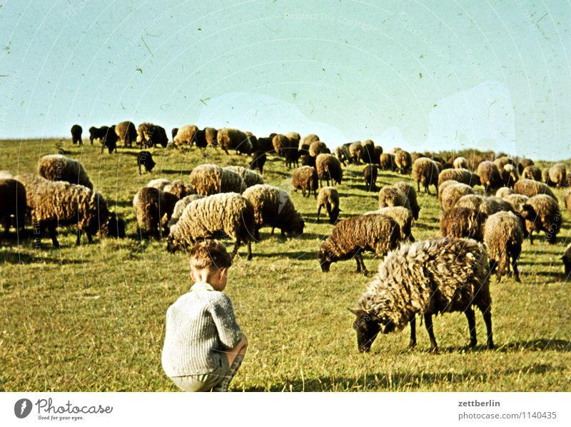 Dornbusch, 1966 Kind Junge Ferien & Urlaub & Reisen Reisefotografie Landschaft Hügel Horizont Himmel früher Kindheit Kindheitserinnerung Jugendliche