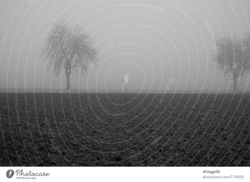 Fog Sport Nebel Joggen Feld Baum Herbst dunkel grau Schwarzweißfoto B/W B&W Natur