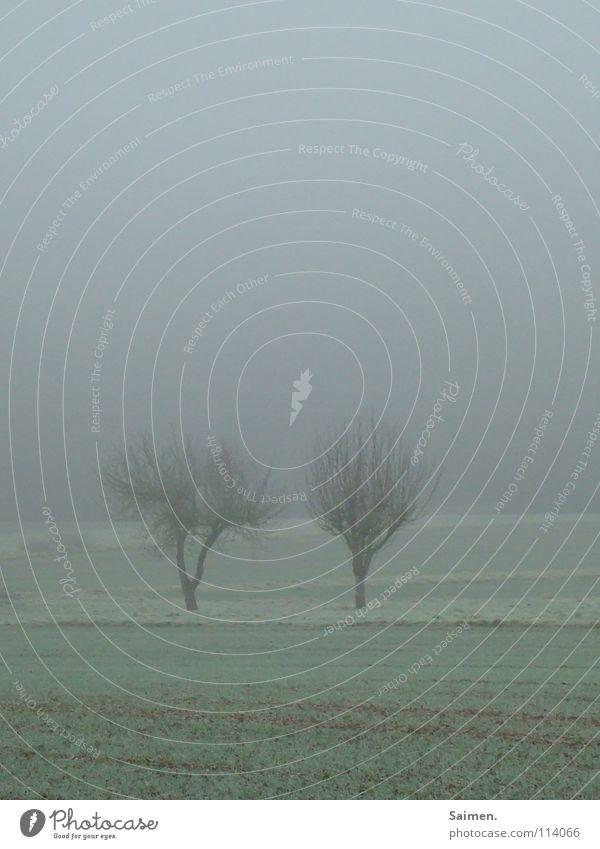 geteilter november Nebel Baum November 2 trist Wiese laublos Herbst Zusammensein Außenaufnahme Trauer Verzweiflung geschlossen Natur Seil Liebe in schwerer Zeit