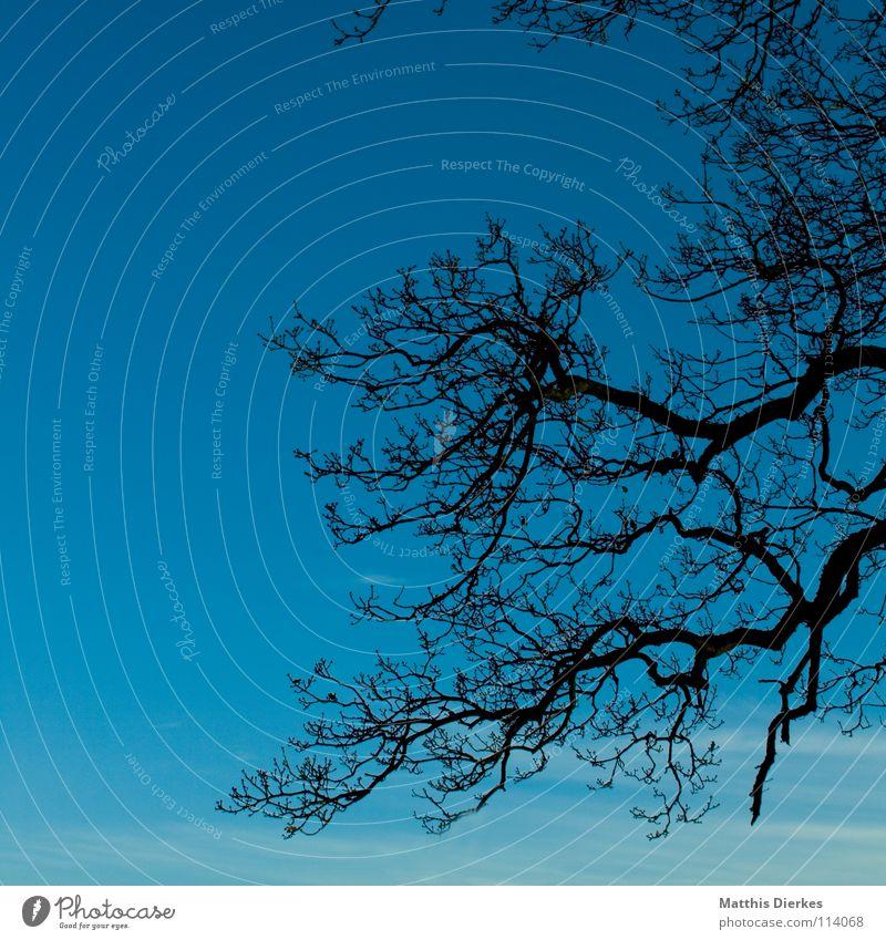 Geäst II Himmel blau grün Baum Wolken Freude dunkel Traurigkeit Herbst Beleuchtung Hintergrundbild Tod Stimmung Horizont Regen Wetter