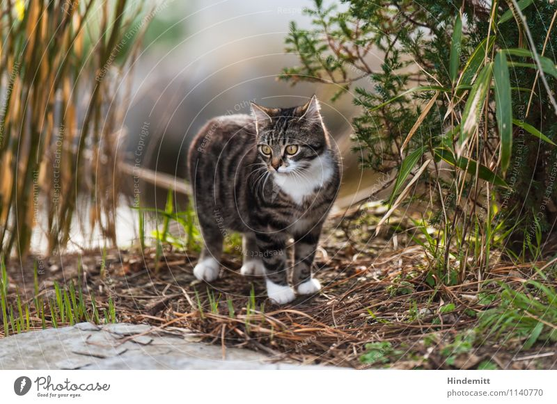 Wo wohnen Katzen? Umwelt Natur Erde Frühling Pflanze Gras Sträucher Blatt Haustier 1 Tier Tierjunges Stein beobachten Blick stehen schön niedlich wild geduldig