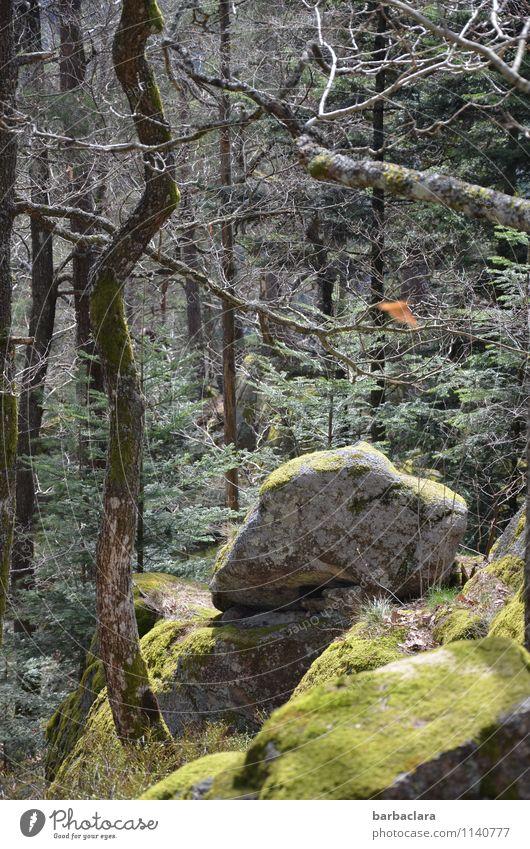 Igelloch Natur grün Baum Einsamkeit Landschaft Wald Umwelt Frühling Wege & Pfade Stein Stimmung Felsen wild Freizeit & Hobby Kraft hoch