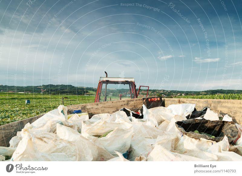 Erntesäcke auf dem Traktor beladen Natur Umwelt Arbeit & Erwerbstätigkeit Zufriedenheit Feld authentisch Industrie Landwirtschaft Gemüse Beruf Bauernhof