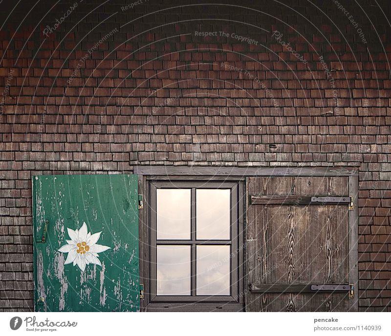einkehren Lifestyle Ausflug Berge u. Gebirge wandern Wohnung Kultur Natur Frühling Sommer Alpen Hütte Fenster Holz Erwartung Zufriedenheit Wirtschaft Edelweiß