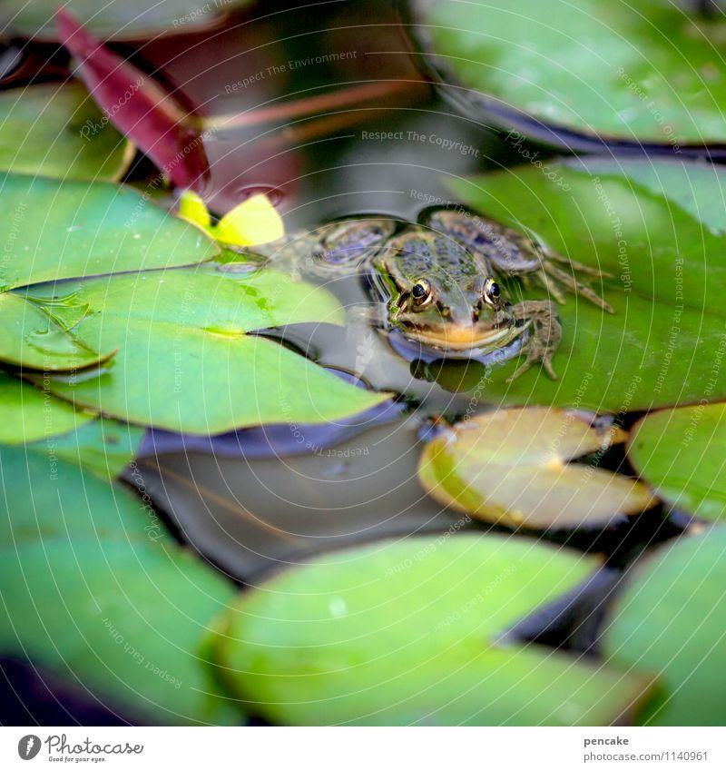 wetter | frosch Natur Sommer Pflanze Teich Tier Frosch 1 Zeichen Bekanntheit kalt nass natürlich grün Seerosenblatt Seerosenteich Meteorologe Farbfoto