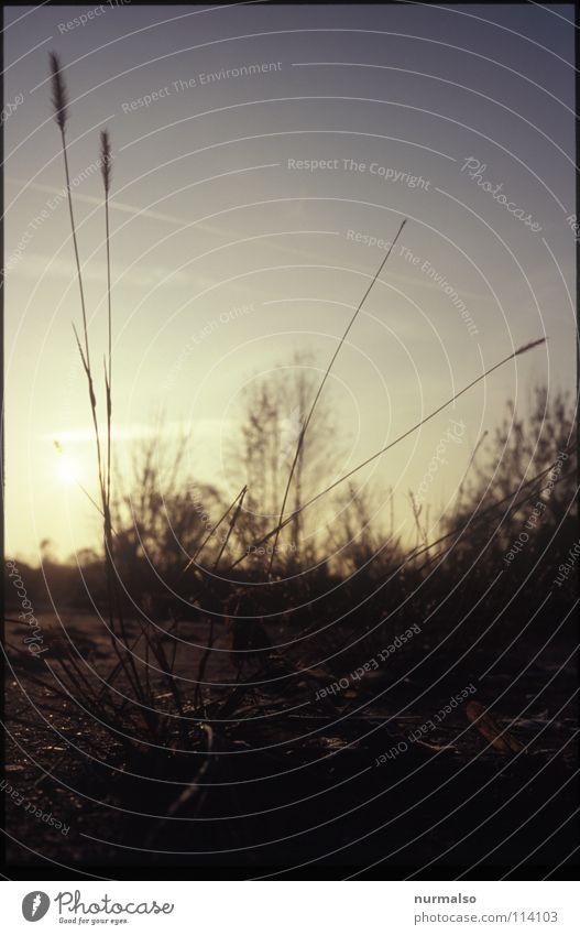 Guter Morgen XIV Himmel Natur schön Einsamkeit Landschaft Ferne Graffiti Gras Blüte Horizont liegen Beton Luftverkehr Bodenbelag Sträucher einfach