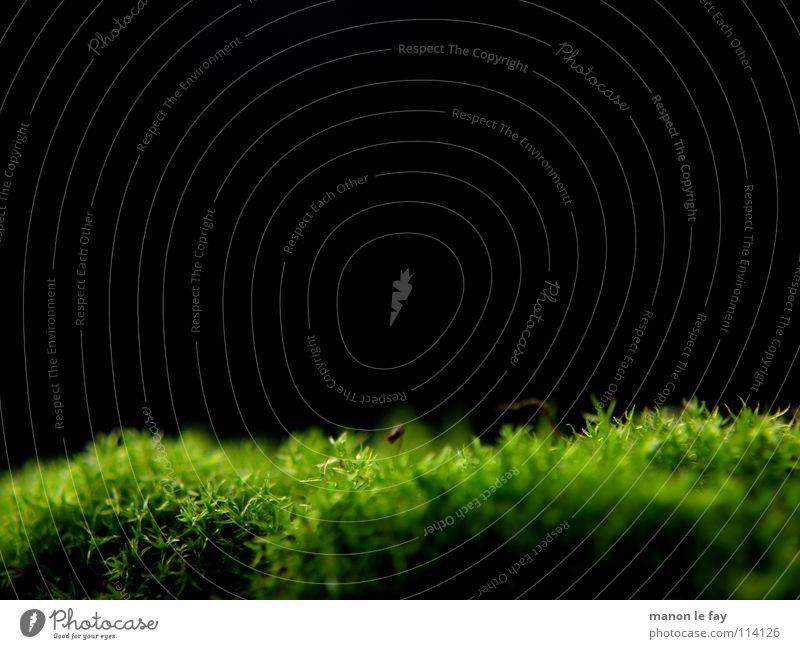 Nix los im Moos schwarz grün nah weich Unschärfe Herbst Hintergrundbild Nahaufnahme Makroaufnahme Haare & Frisuren Natur