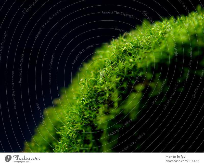Ein Haufen Moos Natur grün schwarz Herbst Haare & Frisuren Hintergrundbild weich nah