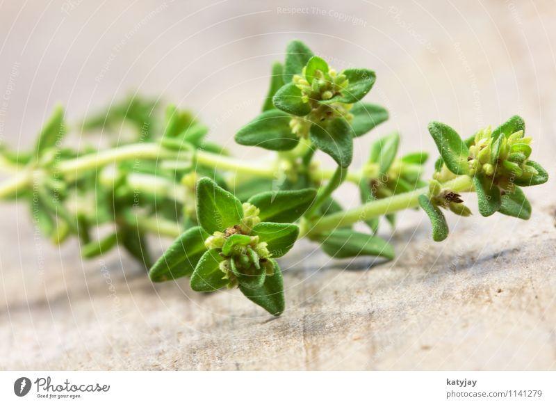 Oregano Thymian Kräuter & Gewürze Pflanze aromatisch Detailaufnahme Ernährung Italien Italienische Küche Gesunde Ernährung grün Alternativmedizin Nahaufnahme