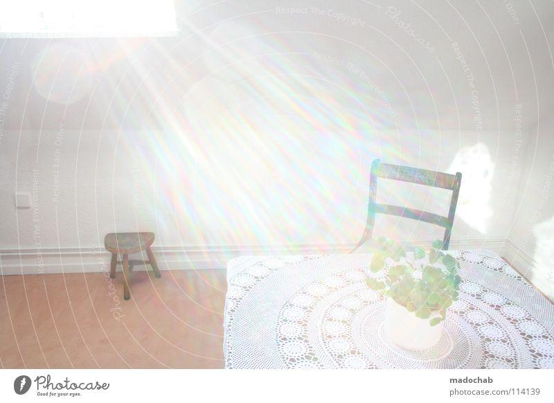 UND WAS HAST DU GESTERN SO GEMACHT? Blume Fenster Wand Mauer Raum planen Häusliches Leben retro Stuhl Küche trashig Idee Strahlung Morgen Lichteinfall
