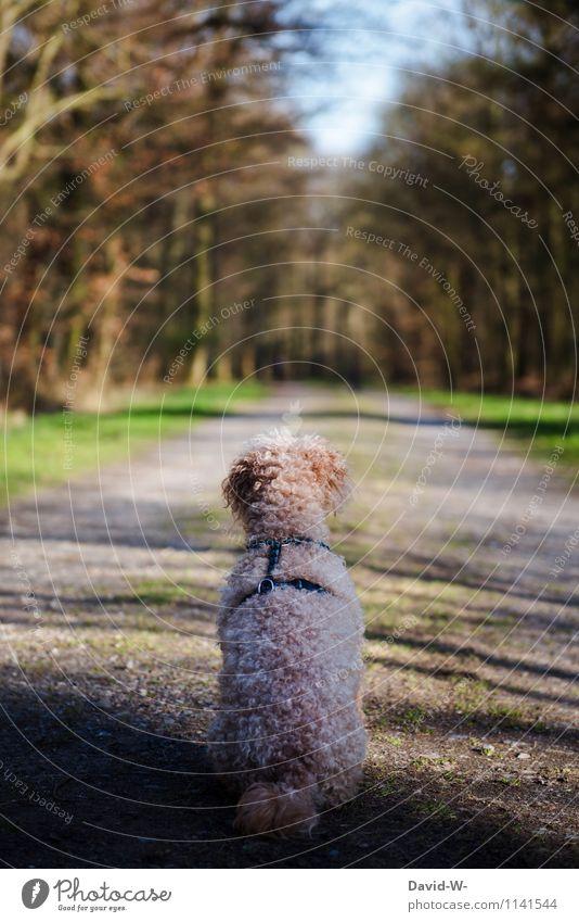 Die Ruhe selbst Hund Mensch Natur Ferien & Urlaub & Reisen Sommer Baum ruhig Tier Wald Leben Stil Freizeit & Hobby elegant wandern sitzen Ausflug
