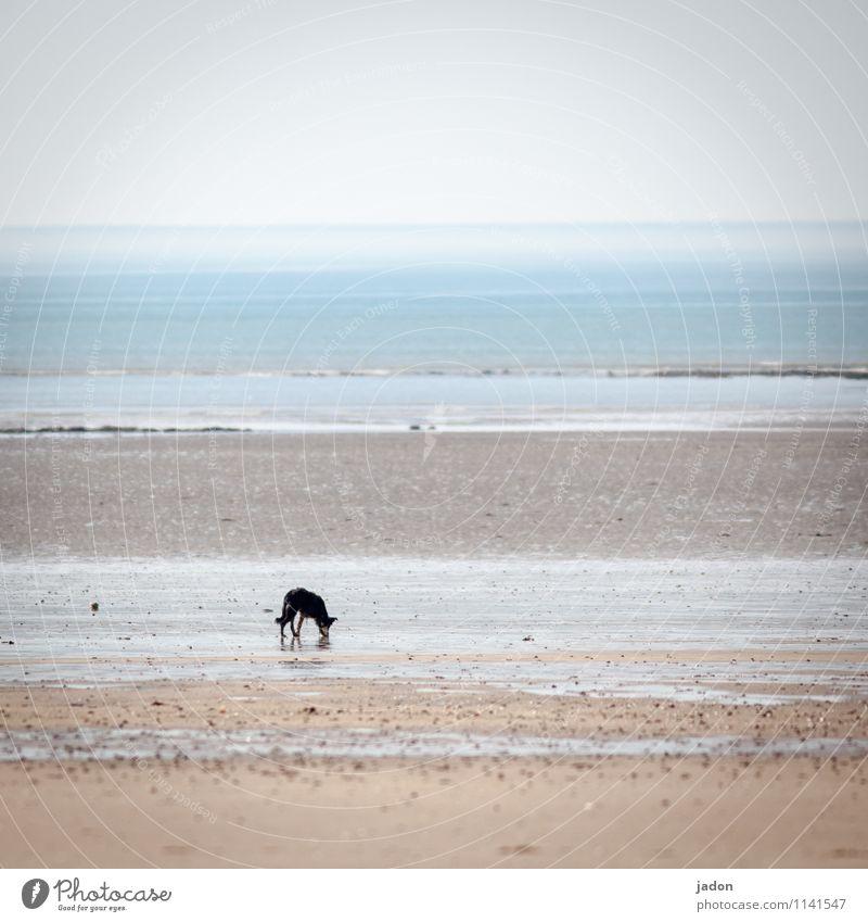 einzelgänger. Hund Himmel Natur Wasser Meer Einsamkeit Landschaft Tier Strand Umwelt Küste Wege & Pfade Sand Horizont Wellen wandern