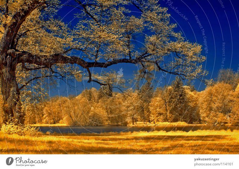 springtime Baum See Schlosspark Park gelb Wiese Sommer Himmel blau Rasen Strücher