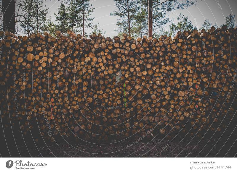 bauholz & brennholz Natur Sonne Baum Landschaft Wald Berge u. Gebirge Umwelt Freiheit Arbeit & Erwerbstätigkeit Energiewirtschaft Tourismus Feld Schönes Wetter