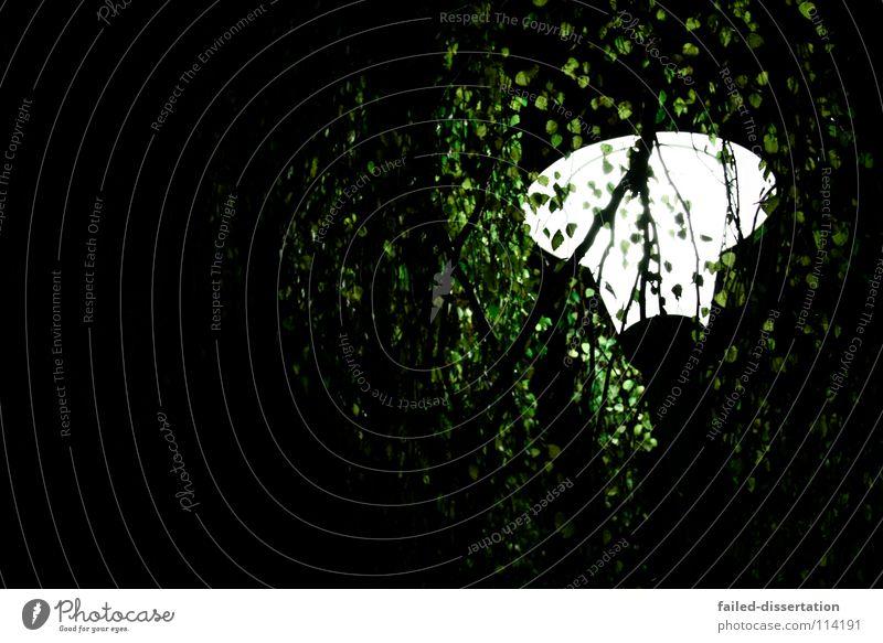 leaflight Baum Blatt Herbst Winter grün braun dunkel Licht Lampe Straßenbeleuchtung Laterne Fußgänger gruselig schwarz weiß groß kalt Luft Waldlichtung glänzend