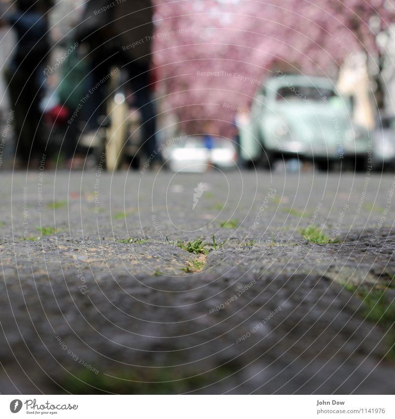 Kirschblüte zu Pflasterstein Sonne Mensch Verkehrsmittel Verkehrswege Personenverkehr Autofahren Fahrradfahren Fußgänger Straße Wege & Pfade Blühend