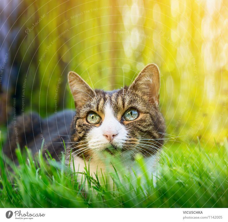 Katze im Sommer Garten Lifestyle Natur Frühling Schönes Wetter Park Tier 1 gelb cat Hintergrundbild Gras grün Jagd grau Auge freilaufend Freigang schön Licht