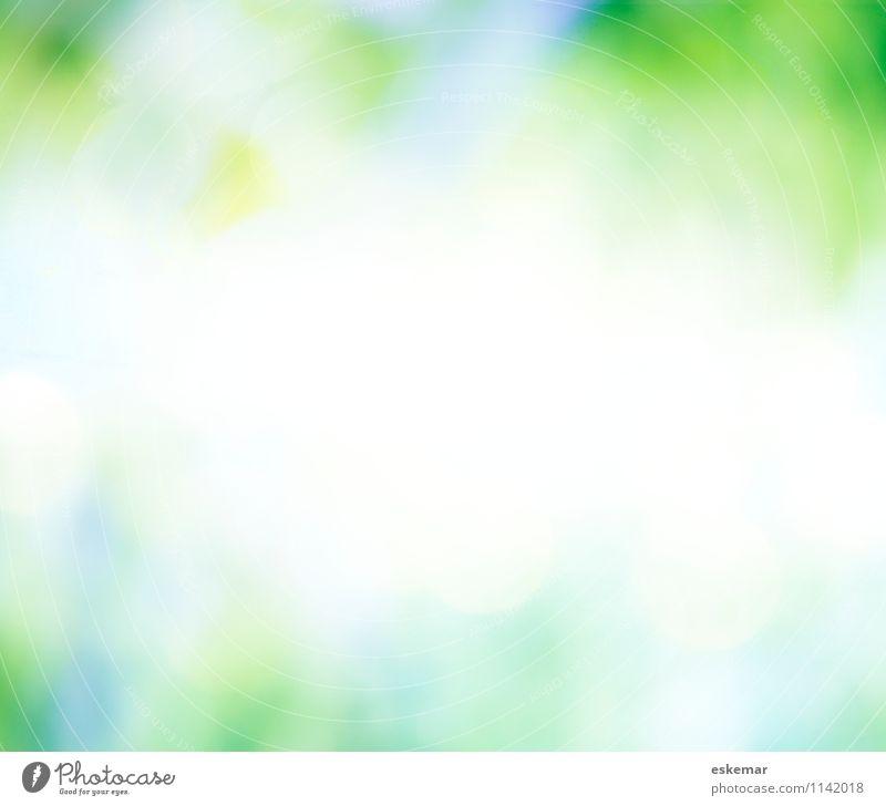 sommergrün Natur Pflanze schön weiß Sommer Frühling Wiese Gras natürlich Hintergrundbild Garten Park frisch ästhetisch Textfreiraum