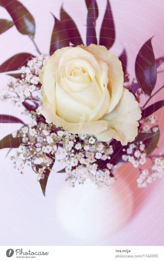 Hochzeitsrose Natur Farbe weiß Umwelt Blüte Feste & Feiern Dekoration & Verzierung ästhetisch Blühend Trauer Rose Kitsch rein Blumenstrauß Überraschung