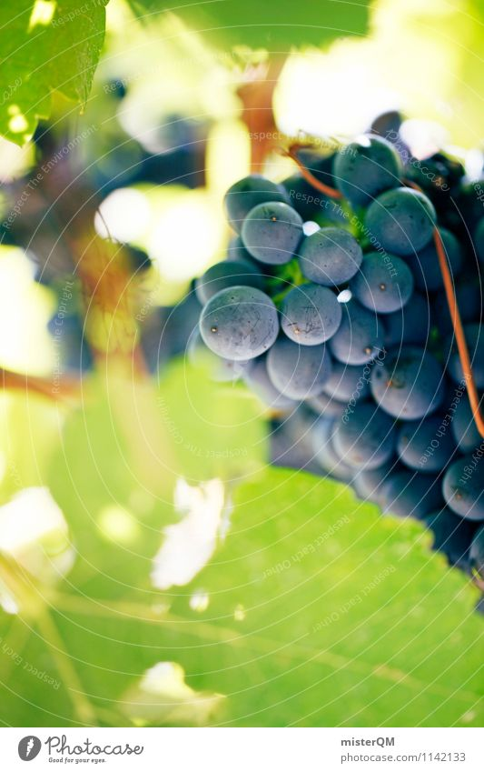 Weinhang II Kunst ästhetisch Wein Wein Weinlese Weinberg Weinbau Weintrauben Perspektive Weinblatt Weingut Traubensaft