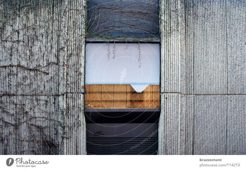Nabelschlau Fenster Glas Beton Fensterscheibe Furche Plattenbau Fuge Wurzel Kieselsteine Efeu Hörsaal Kletterpflanzen Fertigbauweise