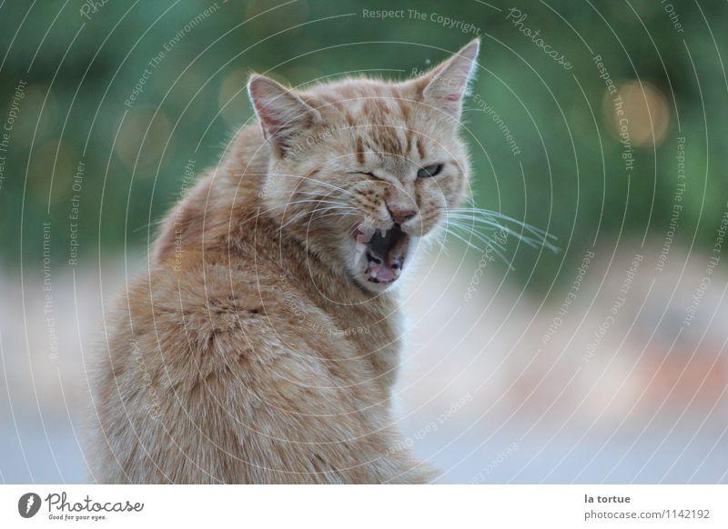 Augenblick Katze Natur Sommer Tier natürlich klein außergewöhnlich Garten Stimmung braun glänzend Freizeit & Hobby wild Lächeln Neugier Fell