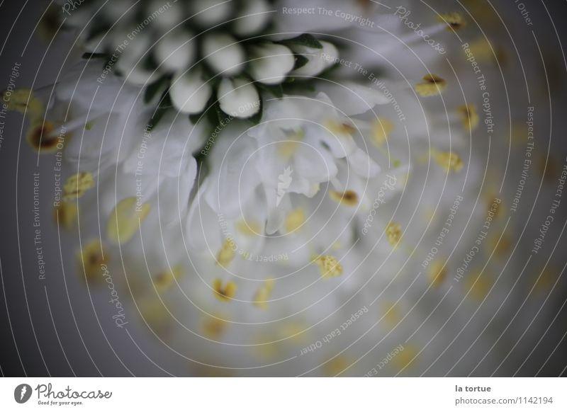 bloom Natur Pflanze schön weiß Blume Landschaft Umwelt gelb Leben Wiese Blüte natürlich klein außergewöhnlich Garten Stimmung