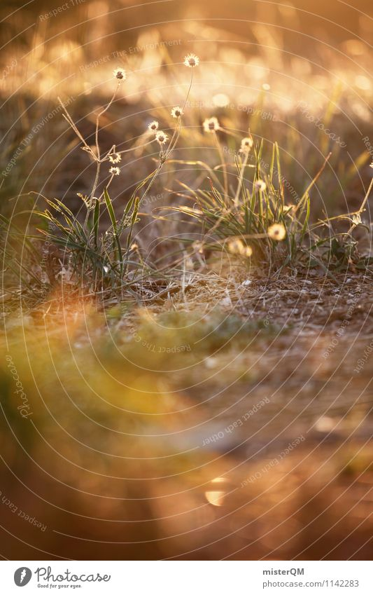 Sonnengras. Landschaft Pflanze Schönes Wetter ästhetisch Zufriedenheit Sommerabend Blume Wiese Wiesenblume Grasland Grasnarbe Grasbüschel Romantik verträumt