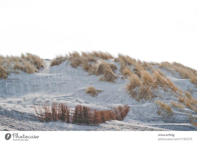 Gegen den Strich Natur Landschaft Pflanze Klima Wetter Wind Wildpflanze Strand Bucht Nordsee Ostsee beobachten träumen verblüht ästhetisch Fröhlichkeit maritim