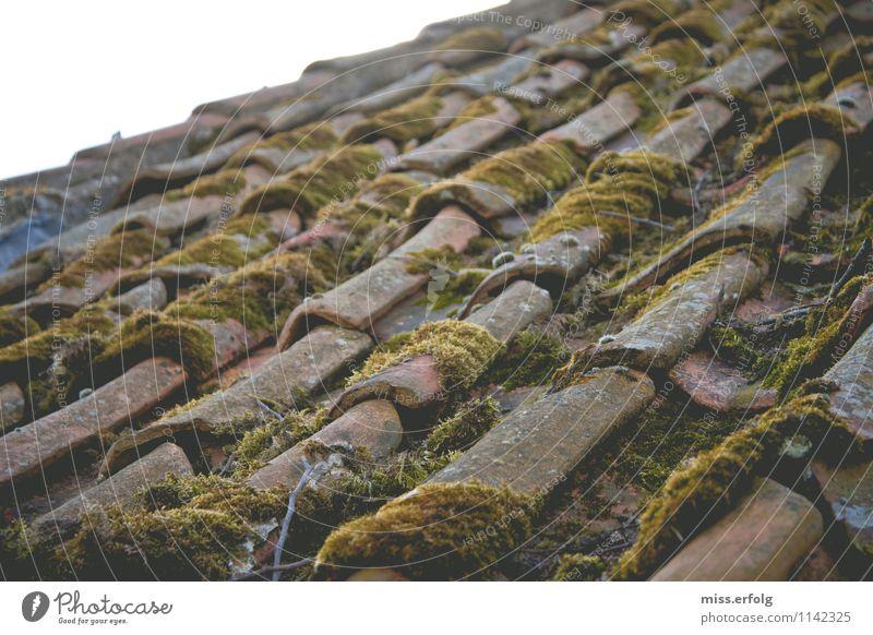 Über den Dächern. Haus bauen genießen Blick Frühlingsgefühle Leben Entsetzen anstrengen Kreativität stagnierend Moos Ziegeldach alt verwittert schön