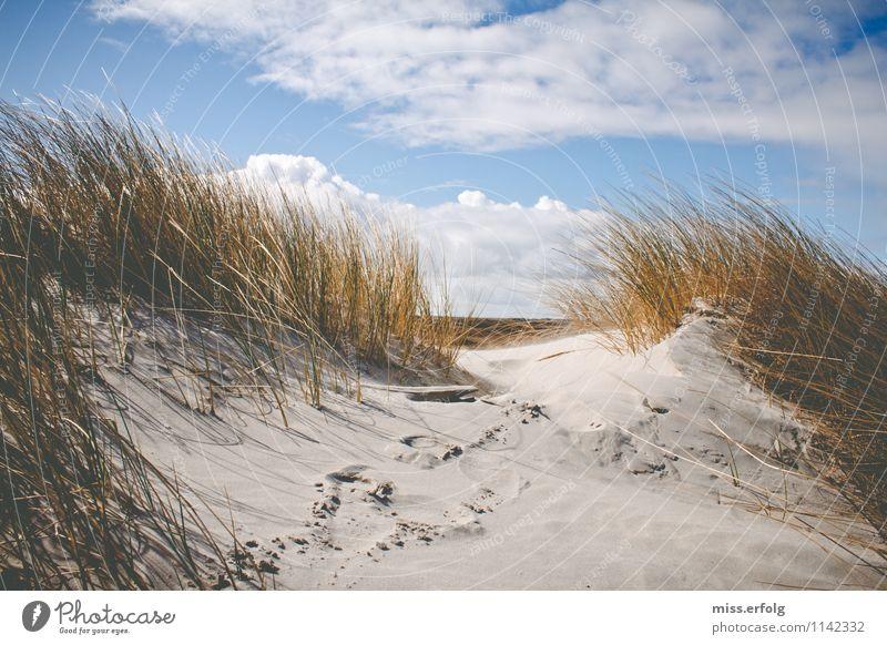 Is bissel windig heut. Pflanze Grünpflanze Wildpflanze Küste Seeufer Strand Nordsee Coolness Freude Glück Fröhlichkeit Zufriedenheit Abenteuer Landschaft Natur