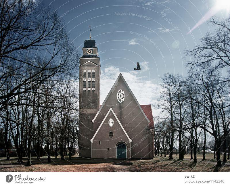 Veni Sancte Spiritus Himmel Baum Wolken Tier Gefühle Religion & Glaube Glück fliegen Horizont glänzend leuchten Idylle groß Kirche Zukunft Klima