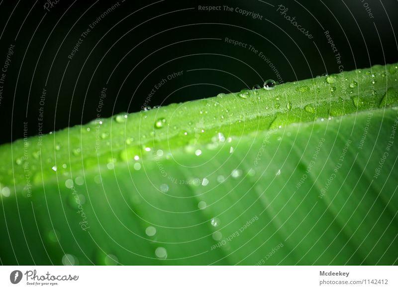 Water points Natur Pflanze grün Wasser weiß Blatt schwarz kalt Umwelt Frühling natürlich grau Park Wassertropfen nass Schönes Wetter
