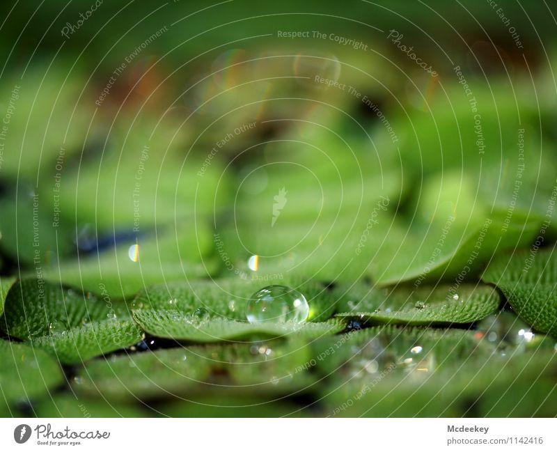 droplet Umwelt Natur Pflanze Wasser Wassertropfen Frühling Schönes Wetter Blatt Grünpflanze Wildpflanze exotisch Garten Park Flüssigkeit kalt nass natürlich