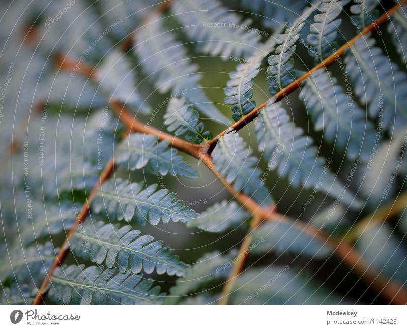 natural growth Natur Pflanze grün weiß Baum Blatt schwarz kalt Umwelt Frühling natürlich grau Garten braun Park orange