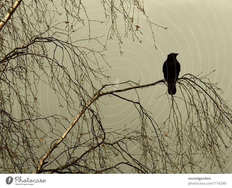 krâwa (althochdeutsch), querformat Krähe Rabenvögel Vogel Baum Blatt laublos Winter Herbst hocken hockend Raum schlechtes Wetter Wolken ruhig Erholung Trauer
