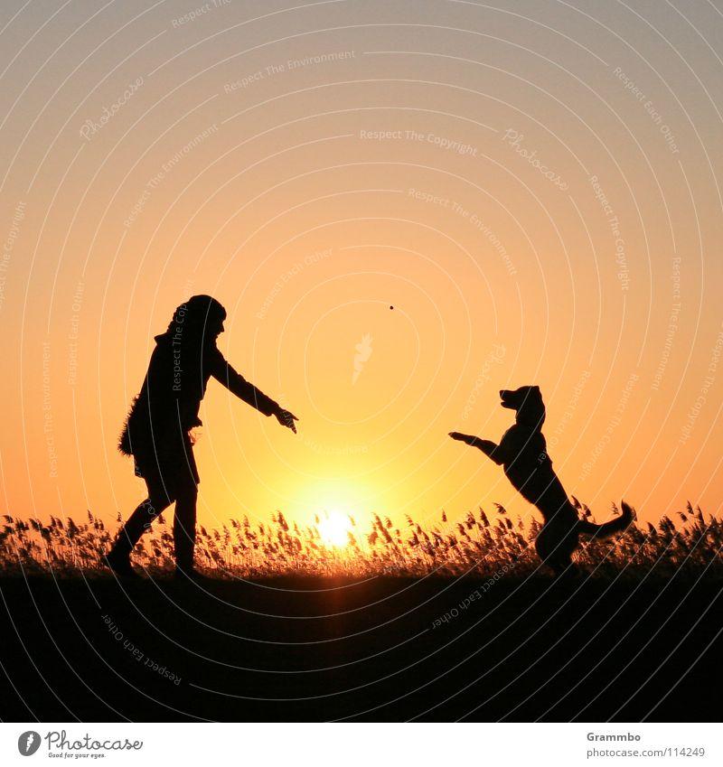 Fang! Frau Sonne rot Freude gelb Hund Schilfrohr Abenddämmerung Deich Hundefutter Abendsonne