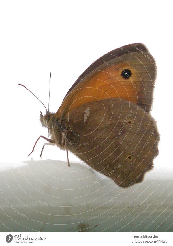 Schmetterling weiß Beine Verkehr Flügel Fühler