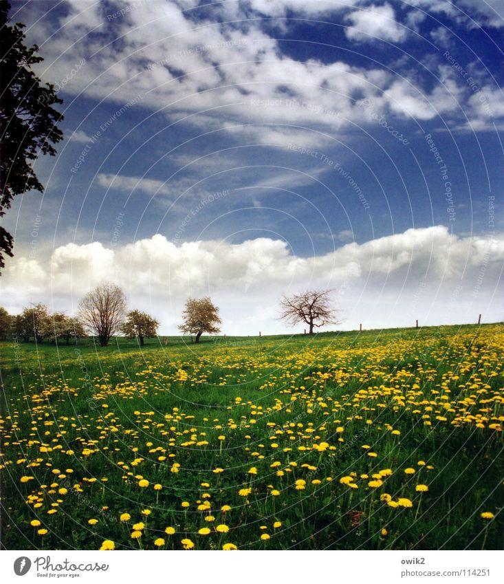 Pastorale Erholung Umwelt Natur Landschaft Pflanze Himmel Wolken Horizont Frühling Klima Wetter Schönes Wetter Baum Gras Blüte Löwenzahn Blühend Wachstum