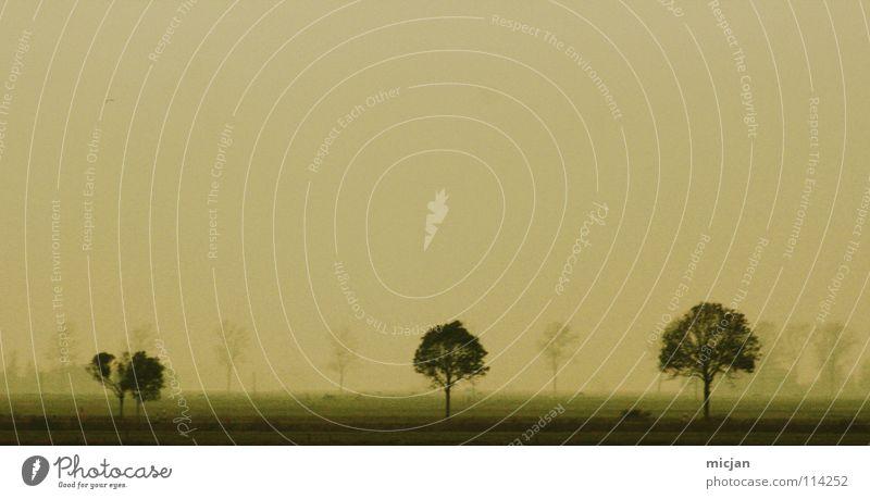 Foggy 2 Nebel Baum Feld gelb grün 3 Wolken Bodennebel Aussicht dunkel Wiese Wasserdampf Horizont Reihe aufgereiht groß Wachstum Verschiedenheit Hintergrundbild