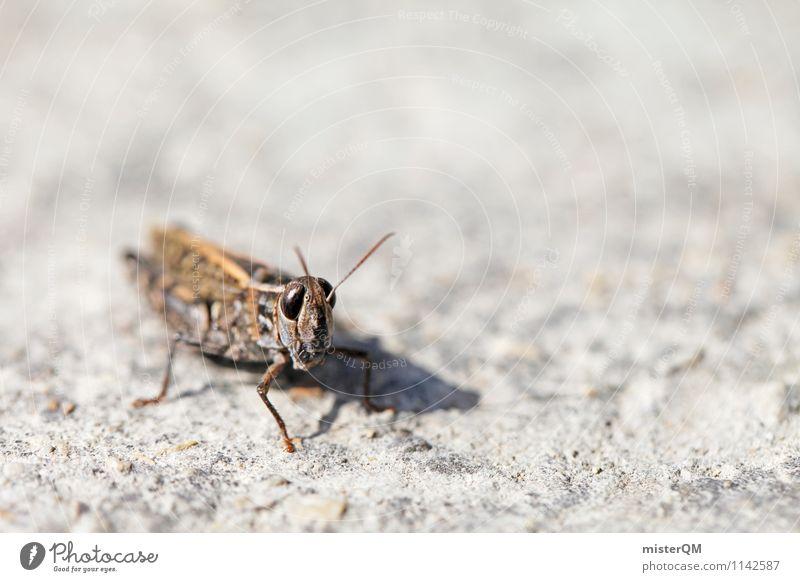 Mr. Hopper. Tier Zufriedenheit Insekt Insektenschutz Heuschrecke Steppengrashüpfer Makroaufnahme Farbfoto Gedeckte Farben Außenaufnahme Nahaufnahme