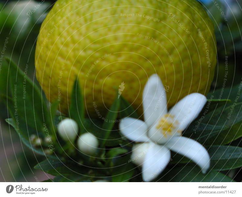Orange & Blüte weiß grün gelb Blatt orange Ast