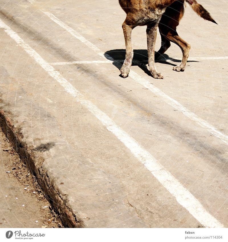 CUT THE DOG Hund Mischling Tier Platz Sommer Asien Vergänglichkeit straßenhund promenadenmischung befallen court