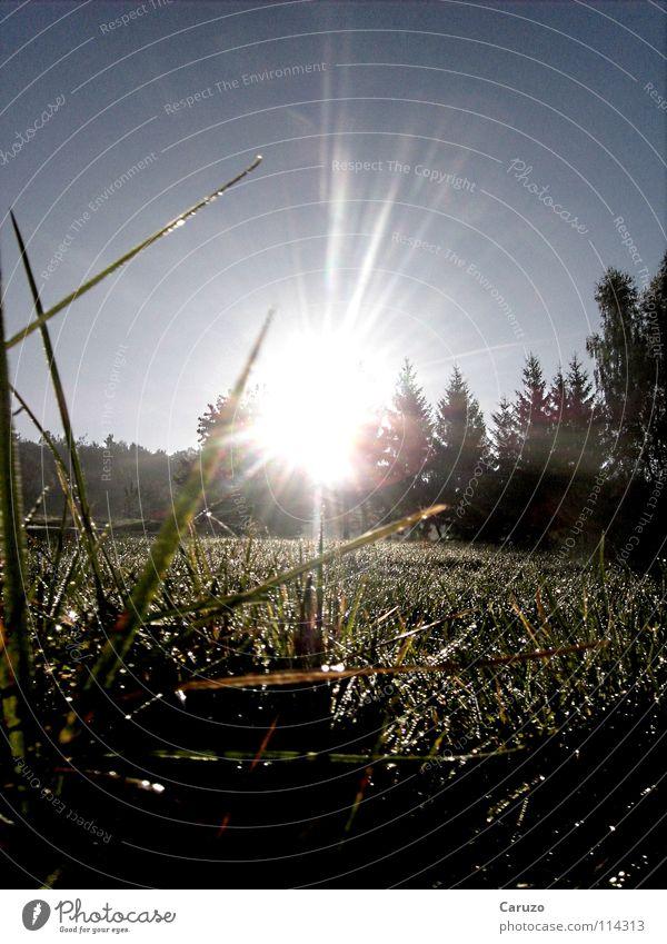 Morgensonne3 Himmel Sonne Gras hell Bodenbelag Frieden Strahlung Halm blenden Himmelskörper & Weltall