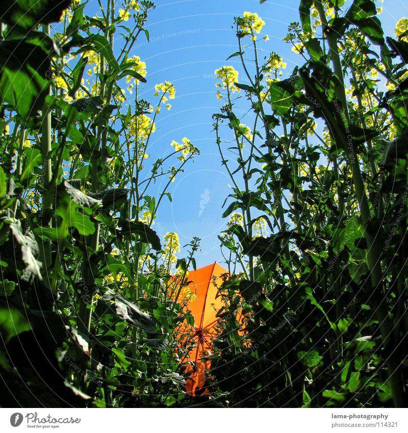 Er traut sich kaum mehr raus... blau Ferien & Urlaub & Reisen grün Pflanze Sommer Blume Freude Farbe Wolken ruhig Erholung gelb Wiese Gras Frühling Freiheit