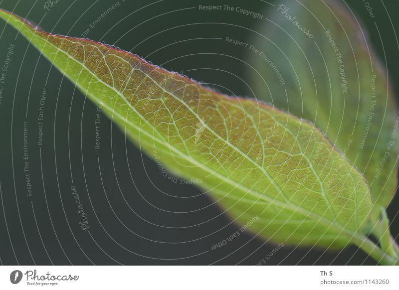Blatt Natur Pflanze schön grün Farbe ruhig Frühling natürlich Design leuchten frisch elegant authentisch Energie ästhetisch