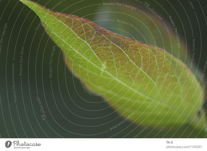Blatt Natur Pflanze Frühling Bewegung Blühend ästhetisch authentisch außergewöhnlich einfach elegant frisch natürlich grün Gelassenheit geduldig ruhig Design